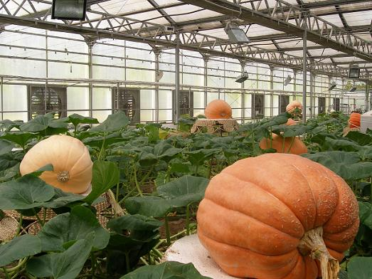 长子县方兴现代农业有限公司